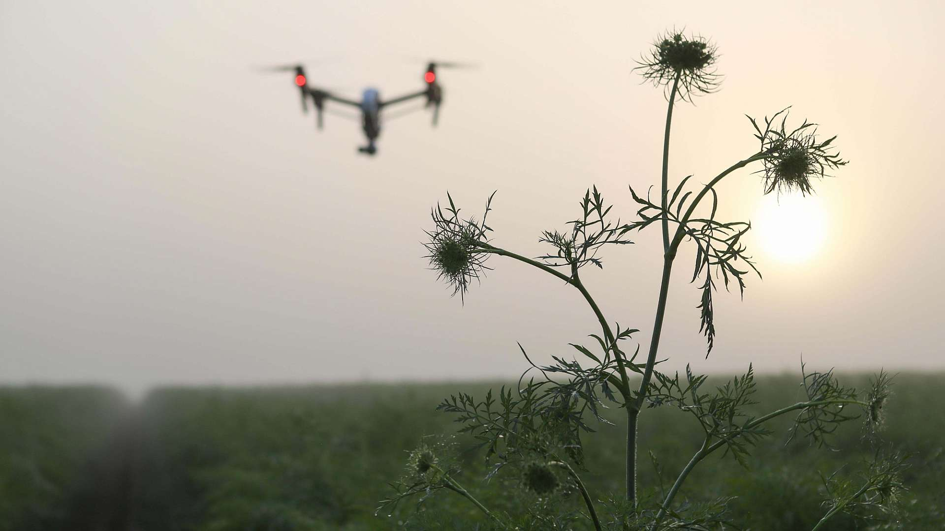 A photo of a drone used in monitoring crops