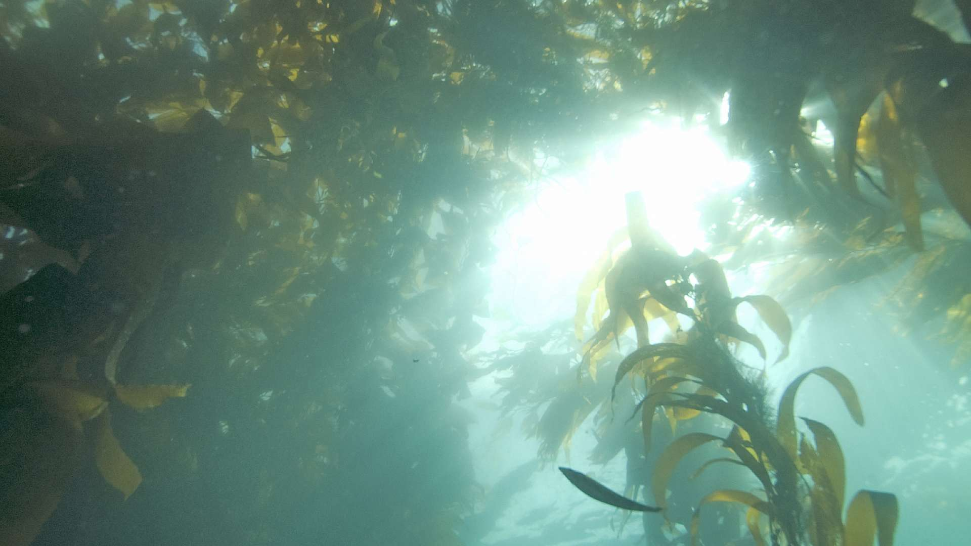 The UK is only just waking up to to the use of seaweed as a feedstock for production of sustainable energy