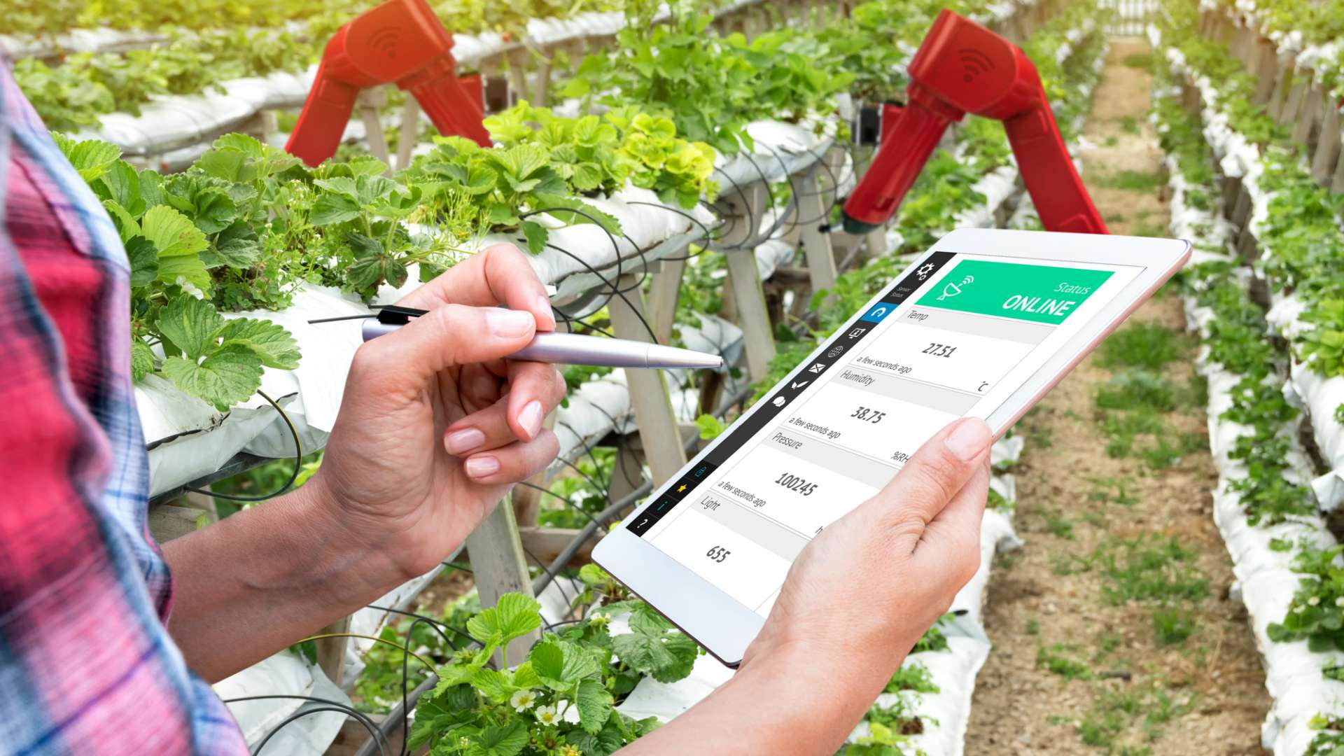 A photo of a farmer using a tablet device to check the status of crops